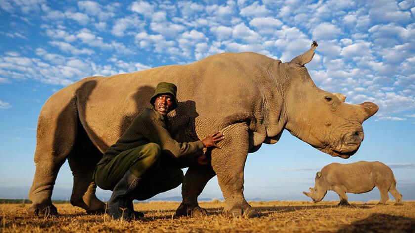 Виртуальный секс я носорог