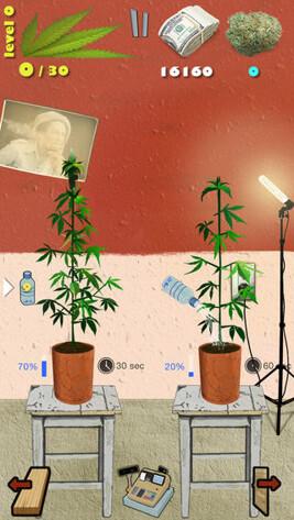 обой марихуану